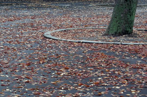 fallen leaves in the park.jpg