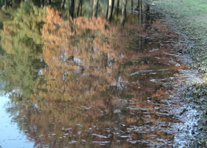 reflected autumn.jpg