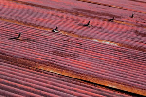 rusted tin roof.jpg
