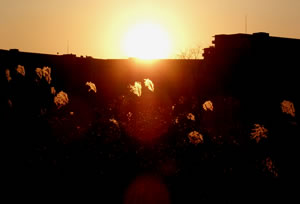 sunset silver grass.jpg