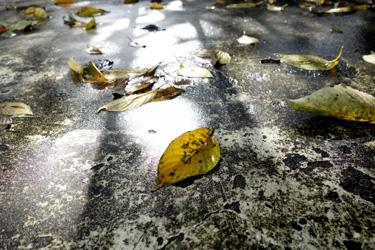 150716_after_rain.jpg