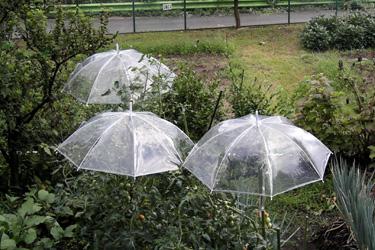 110720_umbrellas.jpg